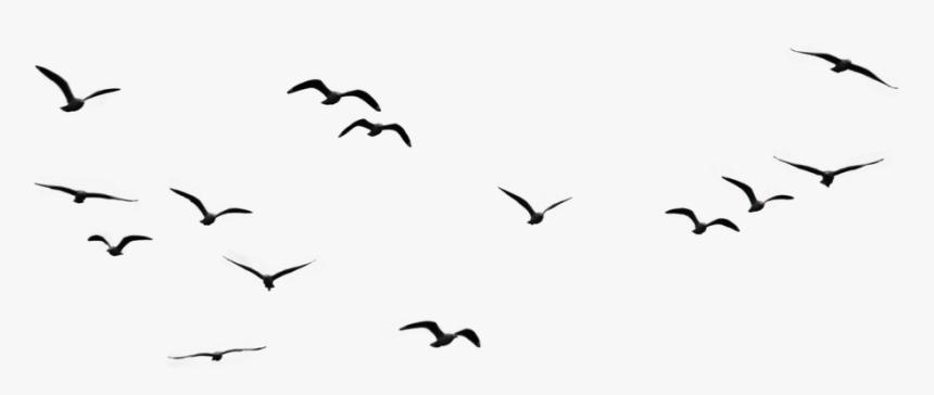 Flock Of Birds Png Images Transparent Free Download Birds Flying In The Sky Drawing Png Download Transparent Png Image Pngitem