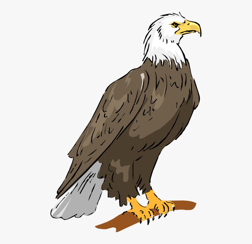 Bald Eagle Eagle Png Image Clipart Philippine Eagle Drawing With Color Transparent Png Transparent Png Image Pngitem