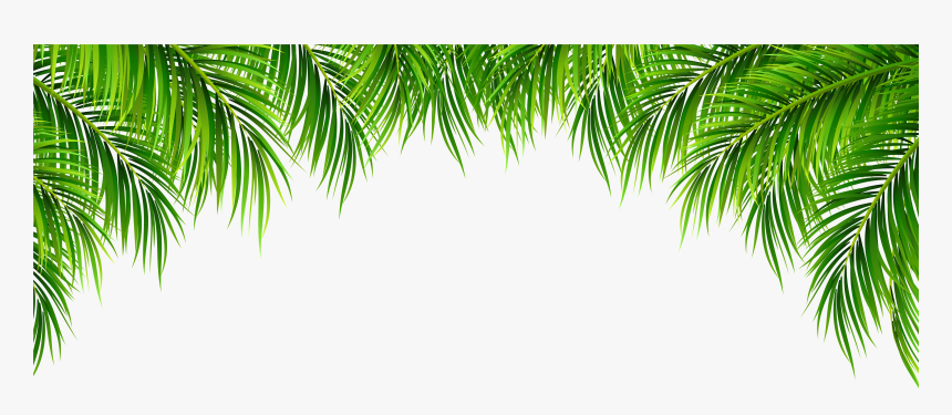 Tree Leaves Png Transparent Background Palm Leaves Png Download Transparent Png Image Pngitem Autumn leaves background png is about is about autumn, autumn leaves, blog, season, autumn leaf color. transparent background palm leaves png