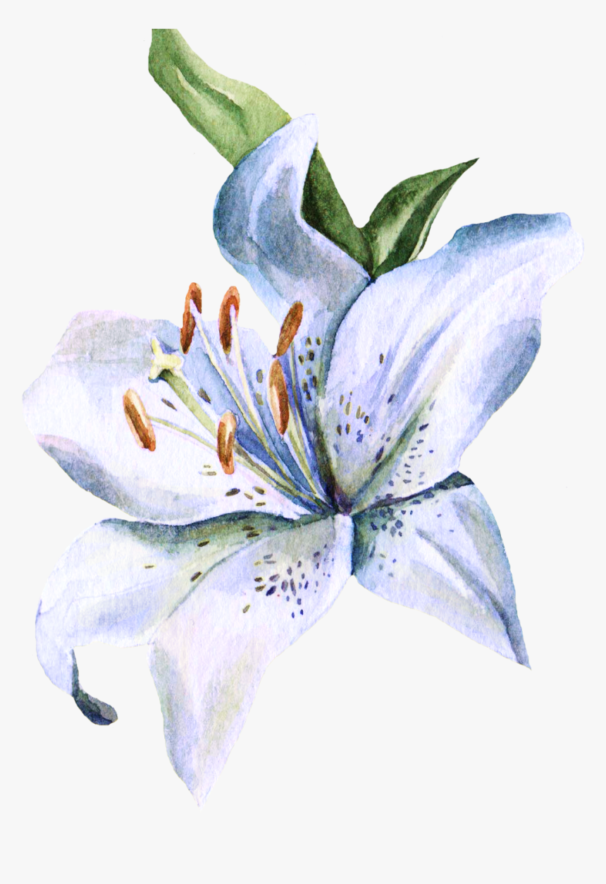 Free Lily Cliparts, Download Free Clip Art, Free Clip Art on Clipart Library