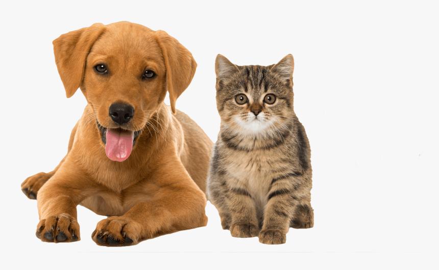 Cat Rabbit And Dog Hd Png Download Transparent Png Image Pngitem