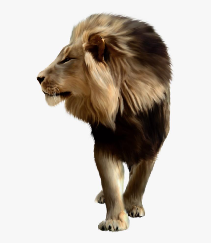 Lion Png Free Download Lion Png For Picsart Transparent Png Transparent Png Image Pngitem