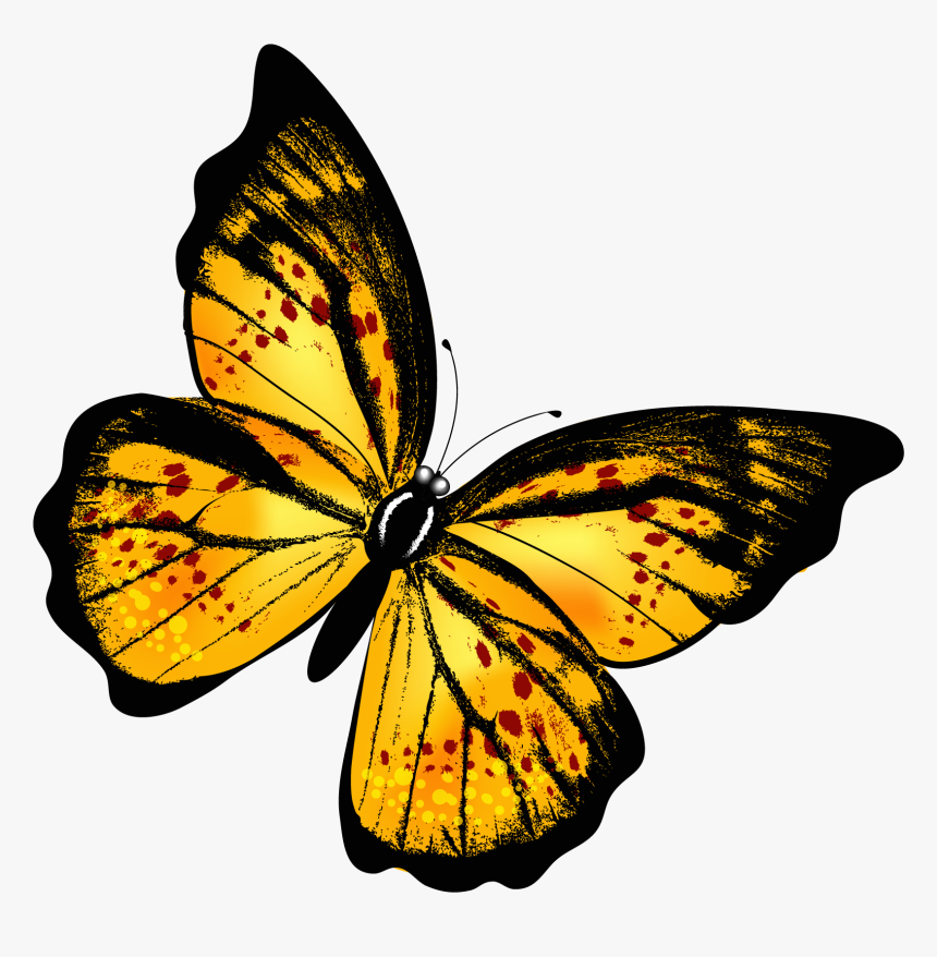 Png Of A Yellow Butterfly Yellow Butterfly Png Transparent Png Transparent Png Image Pngitem