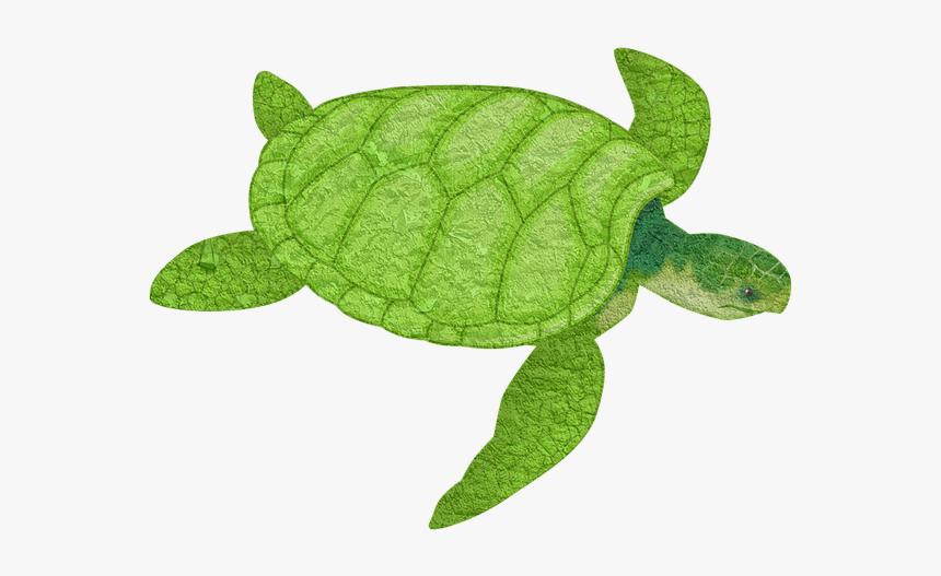 Turtle Animal Sea Animal Tortoise Slow Turtles Transparent