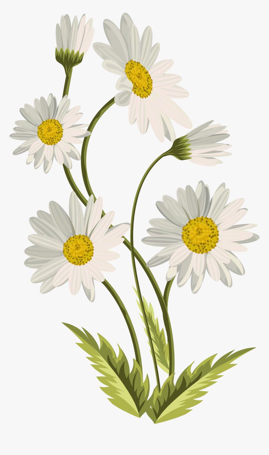 Common Daisy Art Clip Art - Transparent Background Daisy ...