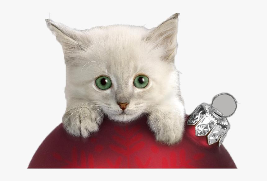 Christmas Cat Kitten Wallpaper