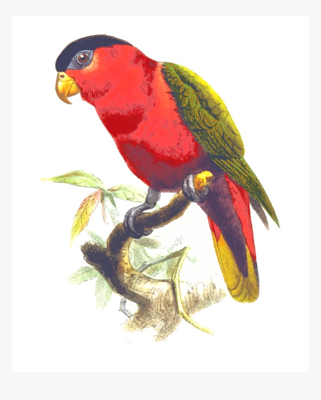 Gambar Burung Nuri Animasi Hd Png Download Transparent Png Image Pngitem
