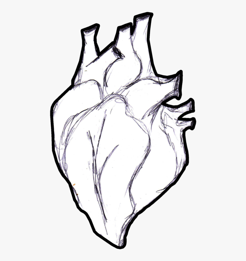 Heart Anatomy Coloring Book Human Body Clip Art - Real Life ...