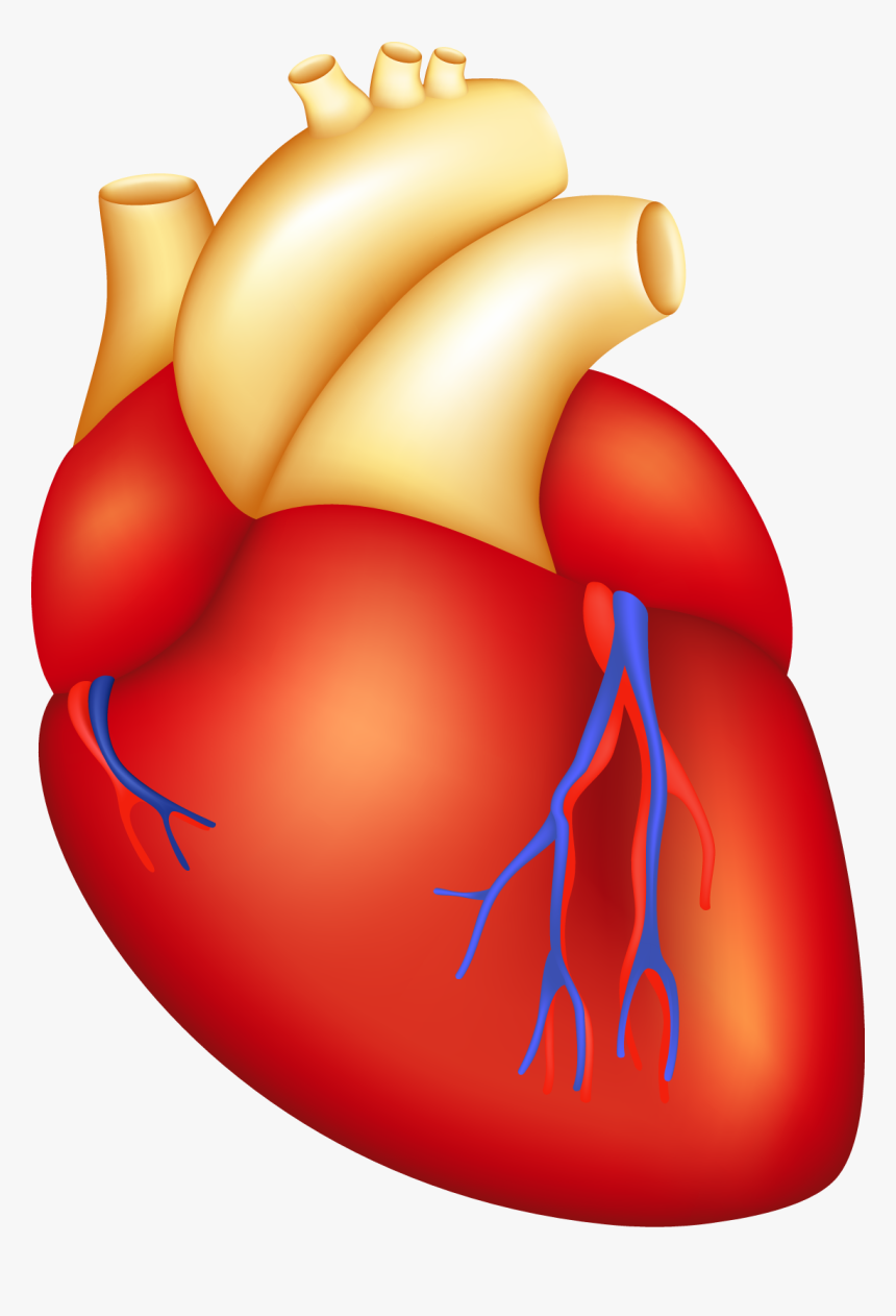 Heart images heart clipart image clip art a red with - ClipartBarn