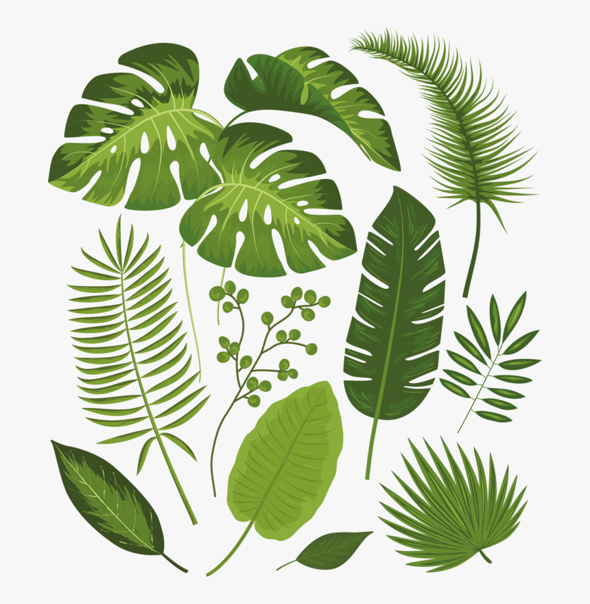 Transparent Tropical Leaves Png Tropical Leaves Drawing Png Download Transparent Png Image Pngitem (each graphic on an individual png with transparent background & up to 8000px). transparent tropical leaves png