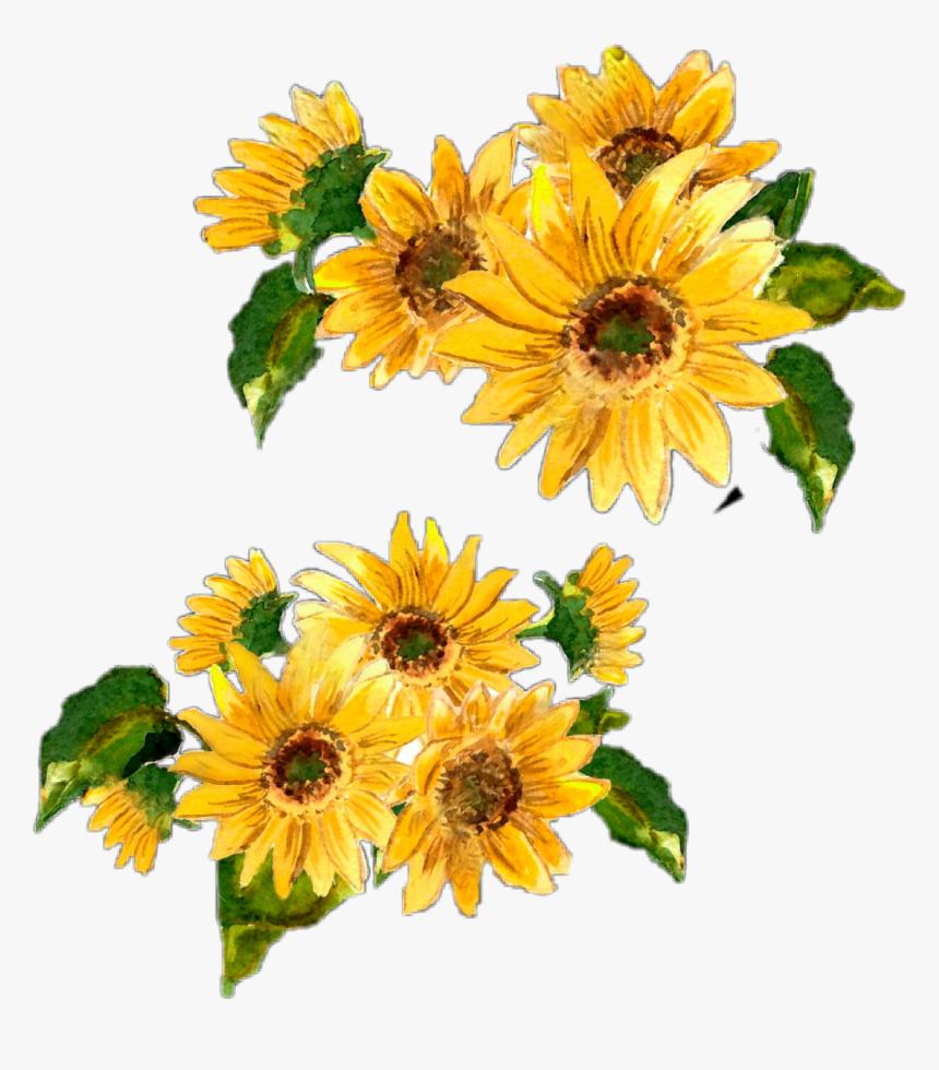 Transparent Rustic Flowers Clipart - Watercolor Sunflower ... (860 x 980 Pixel)