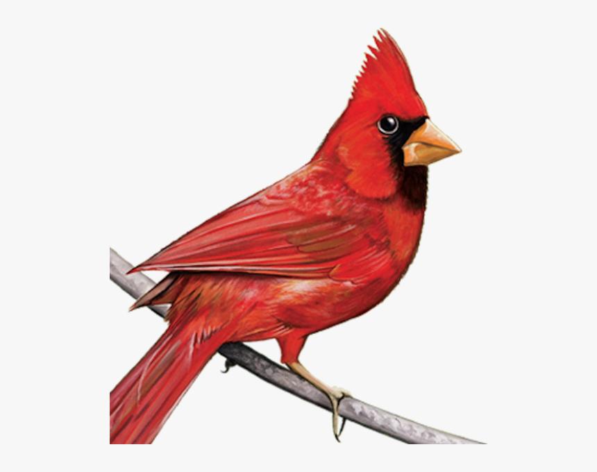 Cardinal - Cardinal Clipart Transparent, HD Png Download , Transparent Png  Image - PNGitem