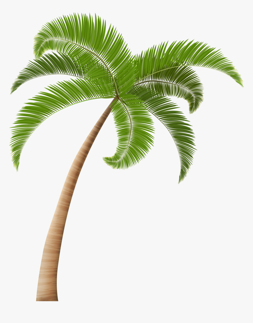 Palm Trees Clip Art Transparent Background Palm Tree Png Png Download Transparent Png Image Pngitem