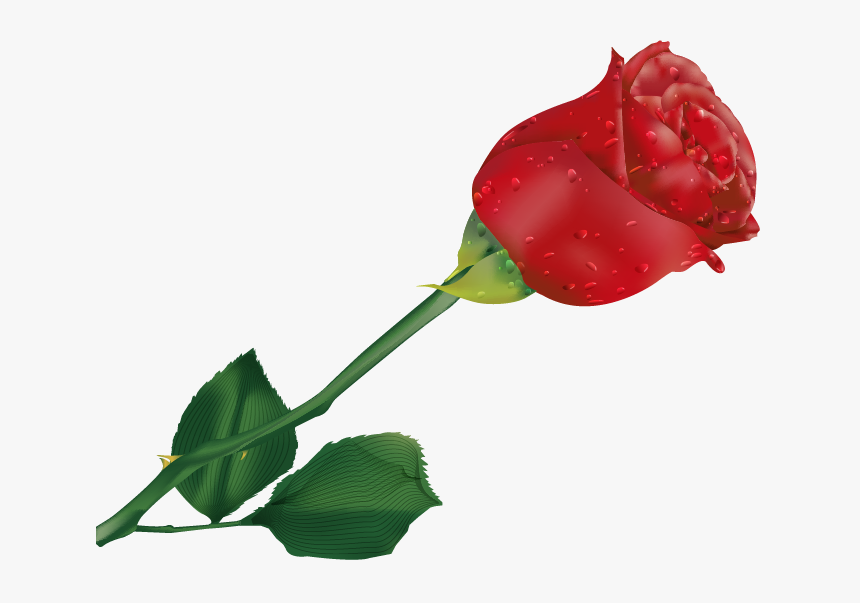Transparent Single Rose Clipart Beautiful Single Rose Flower Hd Png Download Transparent Png Image Pngitem
