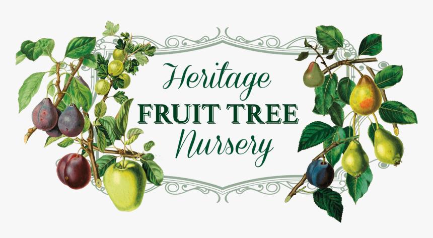 Heritage Fruit Tree Nursery Logo