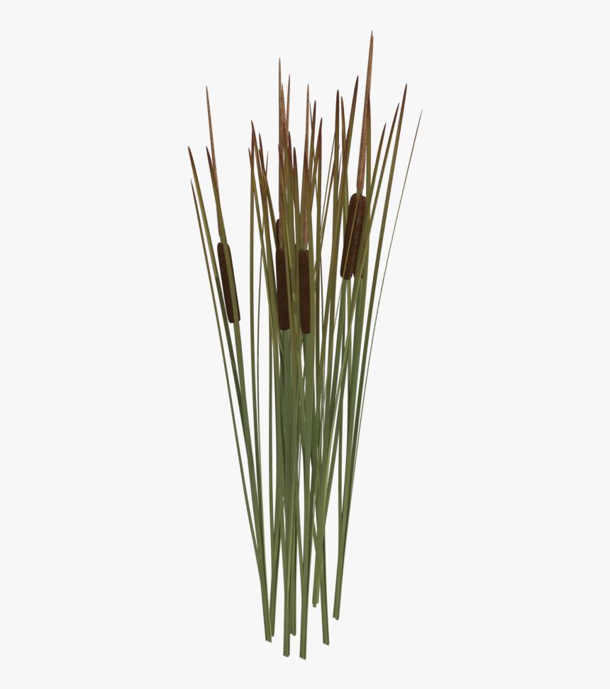 Reeds Png Transparent Reeds Images Reed Plant Png Png Download Transparent Png Image Pngitem