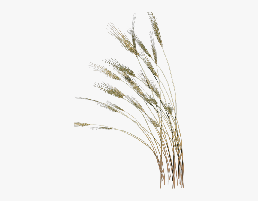 Grass Clipart Reed Grass Vaisakhi Gif Hd Png Download Transparent Png Image Pngitem