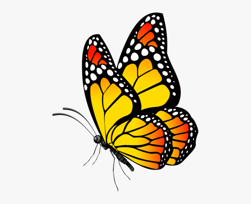 Free Butterfly Lineart, Download Free Clip Art, Free Clip Art on Clipart  Library