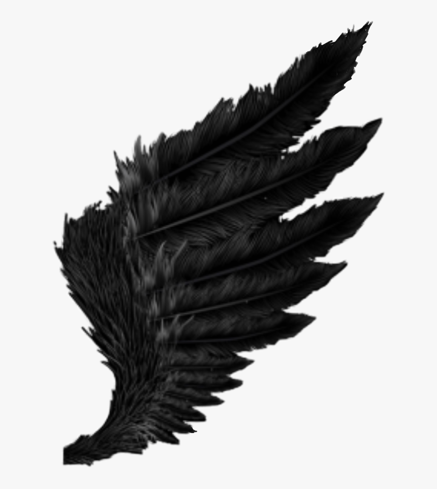 Wing Black Feather Fallen Angel Dark Outfit Cool Amazing