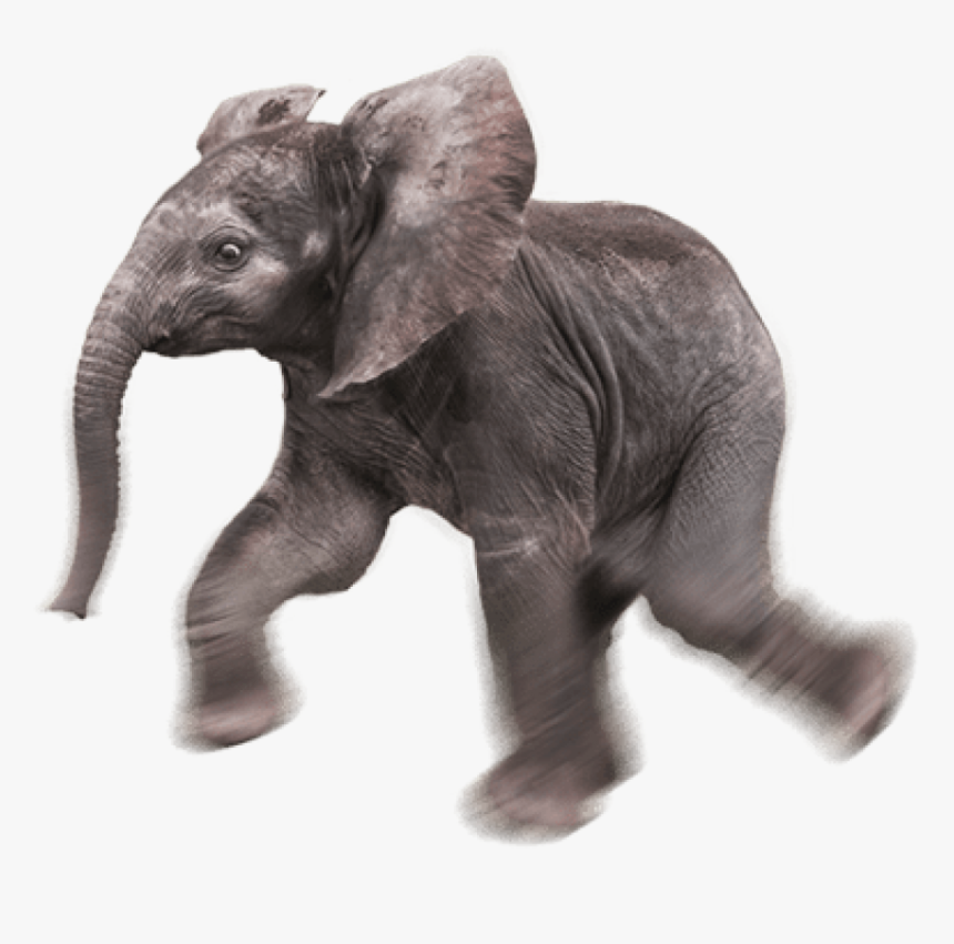 Baby Elephant Png Baby Elephant Transparent Background Png Download Transparent Png Image Pngitem If you like, you can download pictures in icon format or directly in png image format. baby elephant png baby elephant