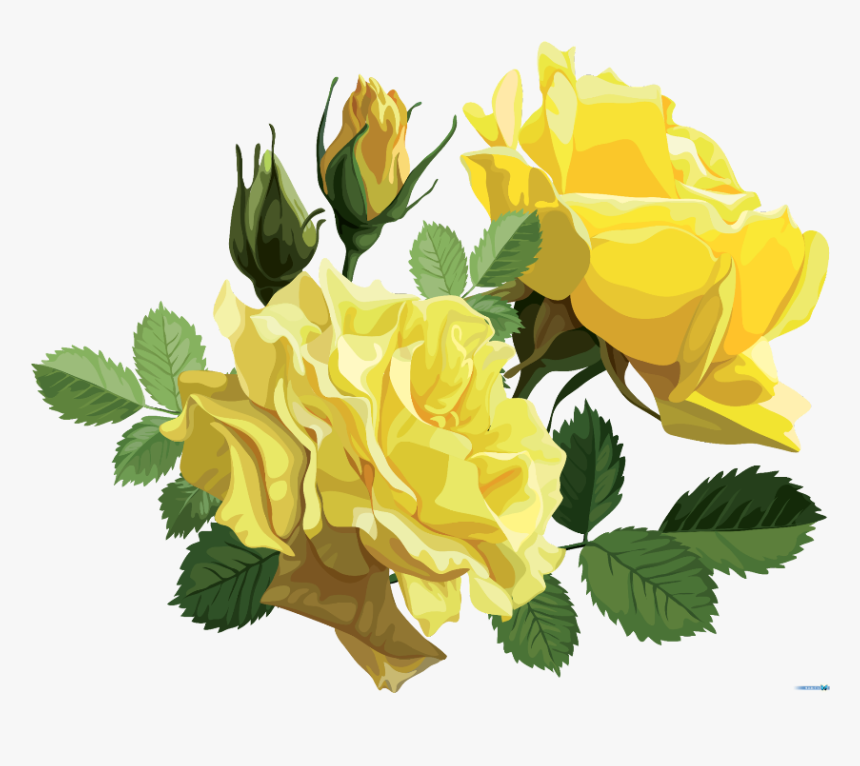 #mq #yellow #roses #rose #flower - Yellow Roses Png, Transparent Png