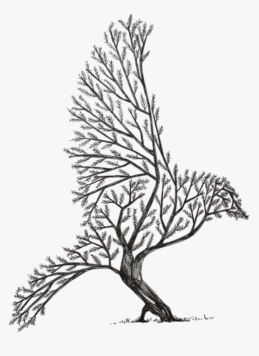 Transparent Tree Drawing Png Cool Tree Drawing Easy Png