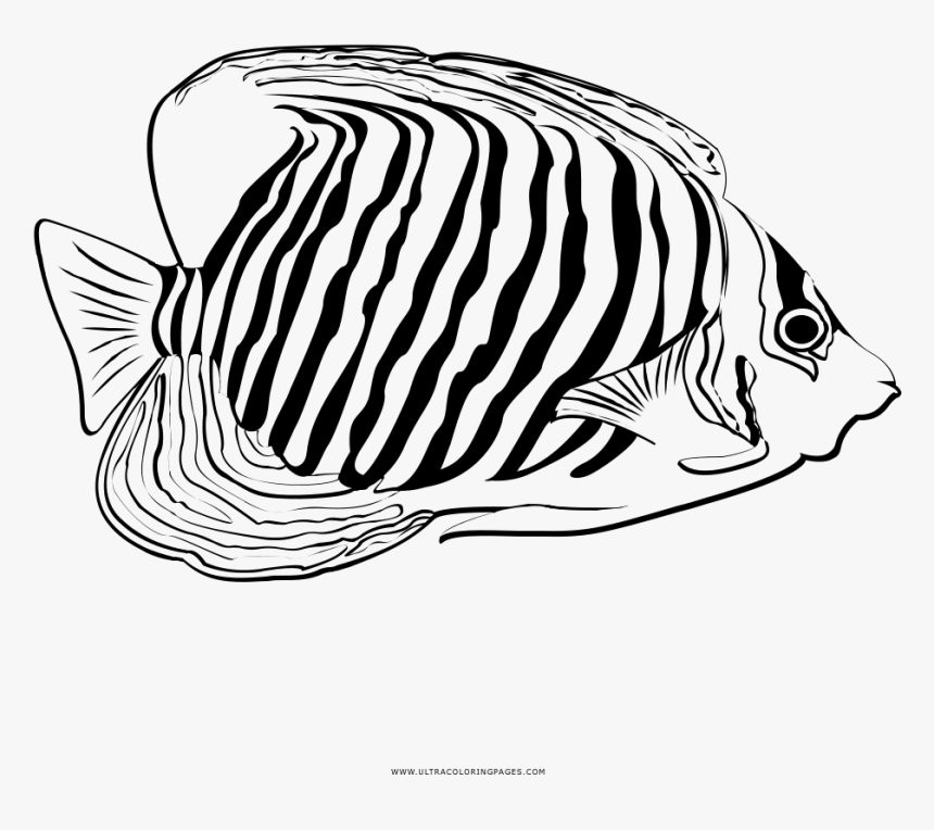 Coloring Page coral - free printable coloring pages | 764x860
