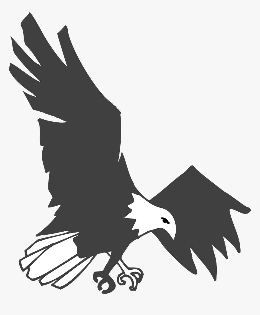 Burung Elang Hitam Putih HD Download Transparent