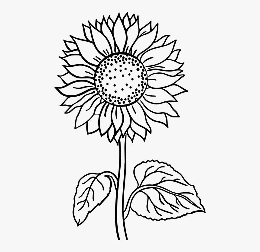 flower black and white flower line