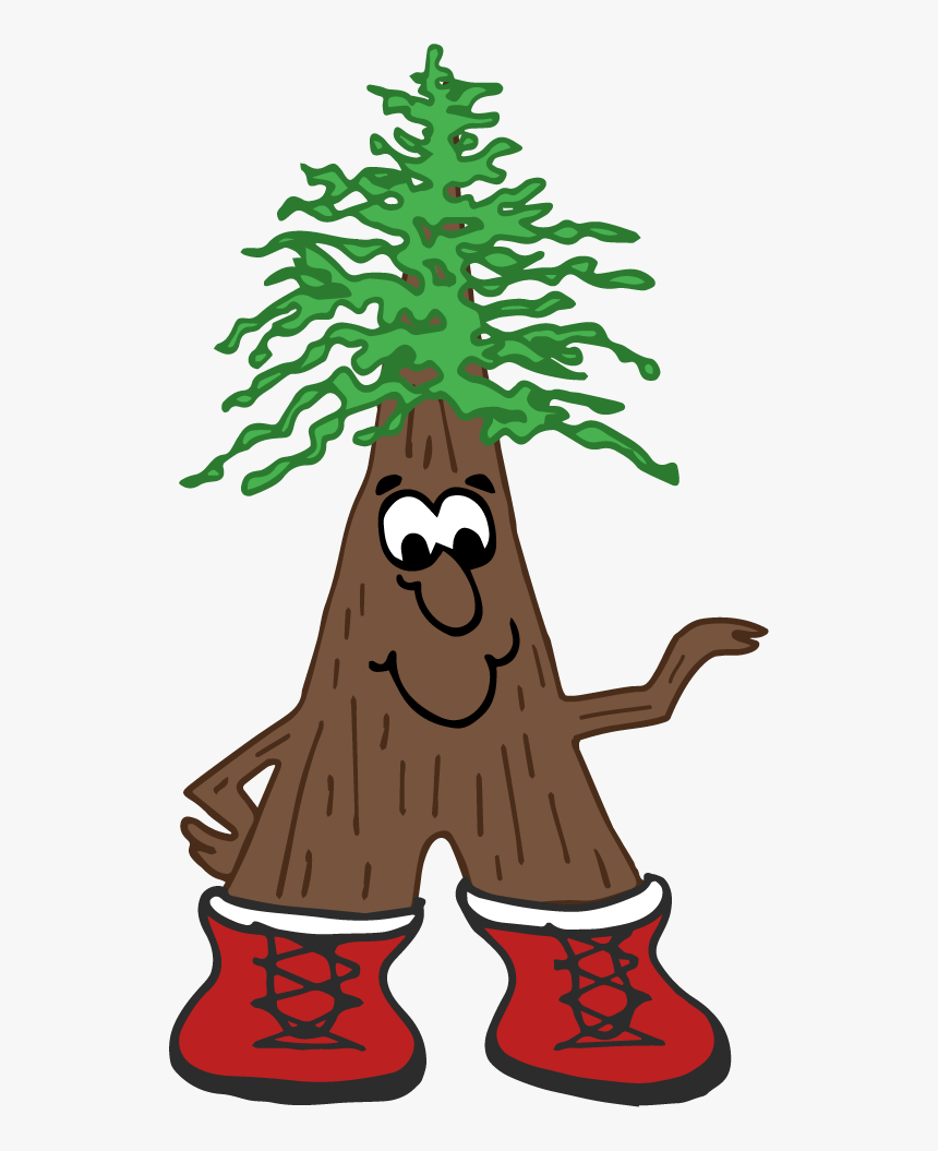 Cartoon Redwood Tree Hd Png Download Transparent Png Image Pngitem How to identify a redwood tree. cartoon redwood tree hd png download