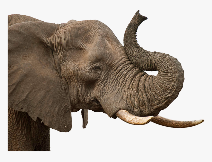 Elephant Head Png Images Transparent Background Elephant Head Png Png Download Transparent Png Image Pngitem Pngkit selects 28 hd elephant head png images for free download. elephant head png images transparent