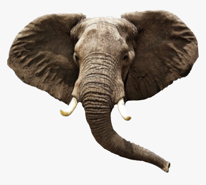 Transparent Elephant Head Clipart Elephant Png Png Download Transparent Png Image Pngitem Three species are recognised, the african bush elephant (loxodonta africana). transparent elephant head clipart