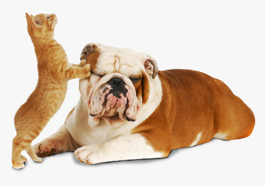 Cat And Dog Cute Pics Of Dogs And Cats Hd Png Download Transparent Png Image Pngitem