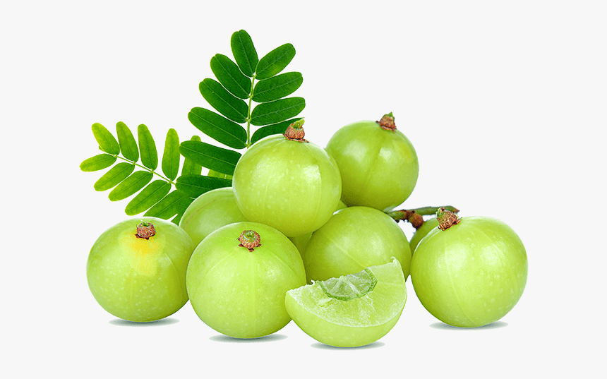 Amla Fruit, HD Png Download , Transparent Png Image - PNGitem