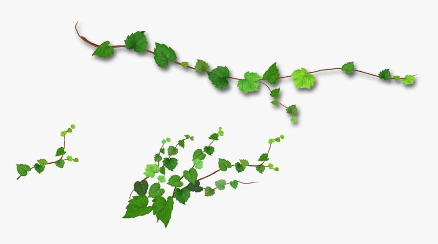 Leaf Plant Clipart, Explore Pictures - Tree Branch Cut Out - Free  Transparent PNG Clipart Images Download