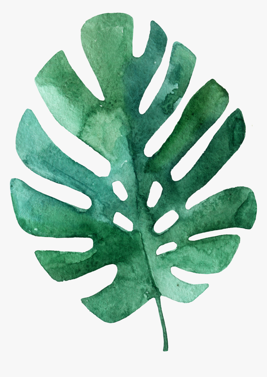 Draw Simple Tropical Leaves Hd Png Download Transparent Png Image Pngitem Silhouettes of evergreen compound leaves, different shapes, leaves made of thin curved lines. draw simple tropical leaves hd png