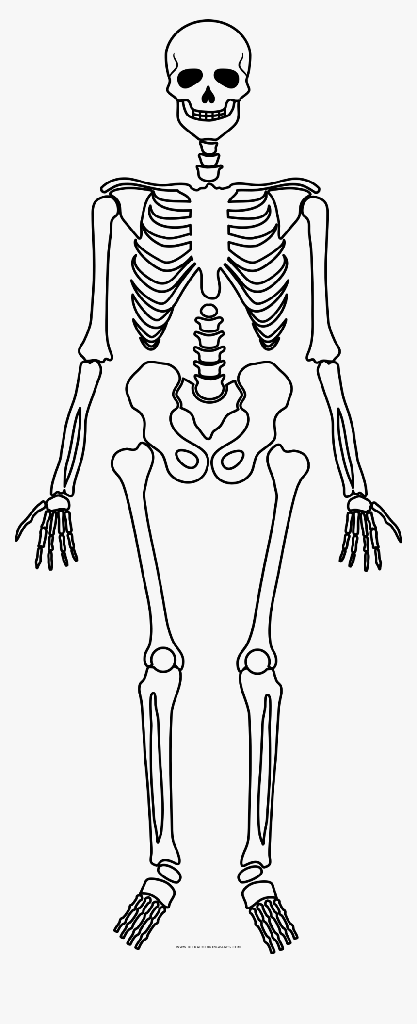 - Skeleton Coloring Page - Scheletro Halloween Da Stampare, HD Png