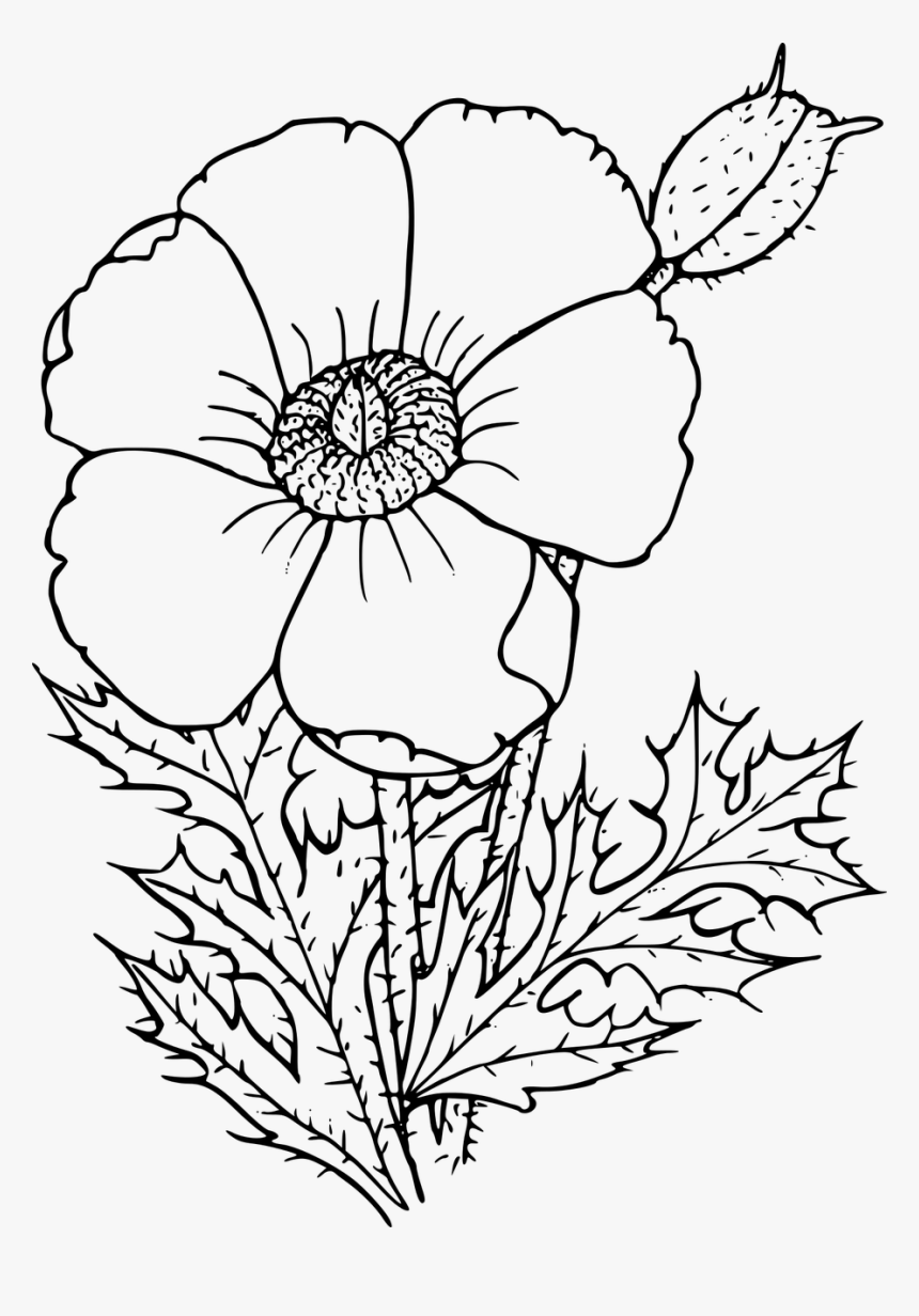 Wildflower In Black And White Poppy Drawing Png Transparent Png