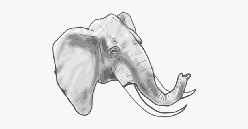 Outline Vector Graphics Of Elephant Elephant Head Coloring Page Hd Png Download Transparent Png Image Pngitem