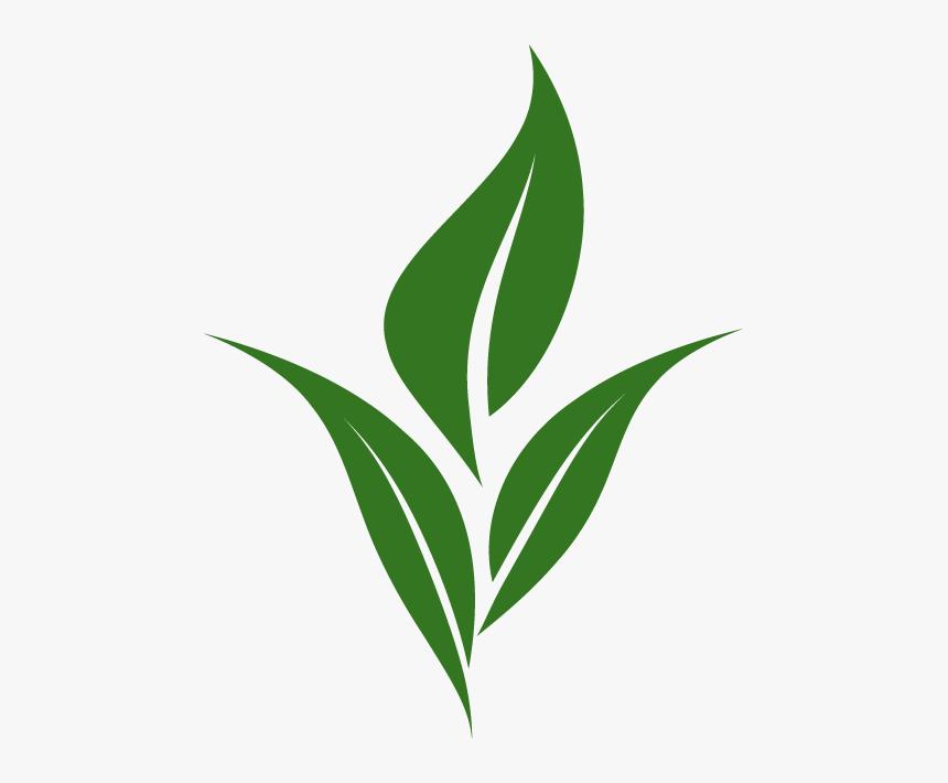 Thumb Image Logo Tea Leaves Png Transparent Png Transparent Png Image Pngitem