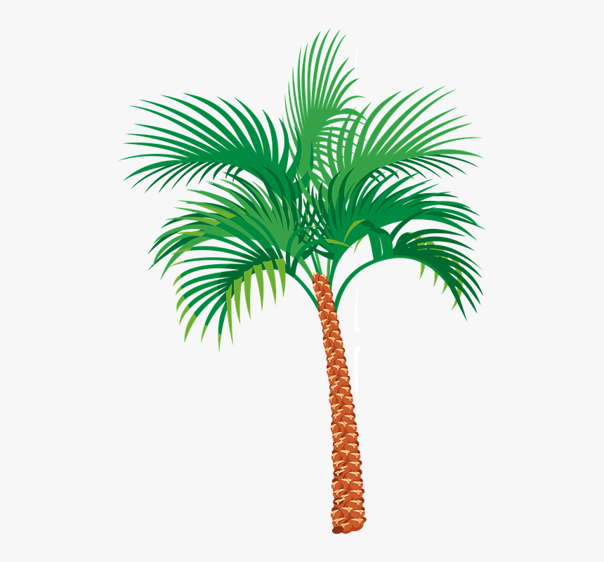 Palm Tree Graphics Palm Tree Png Gif Transparent Png Transparent Png Image Pngitem The best gifs are on giphy. palm tree png gif transparent png
