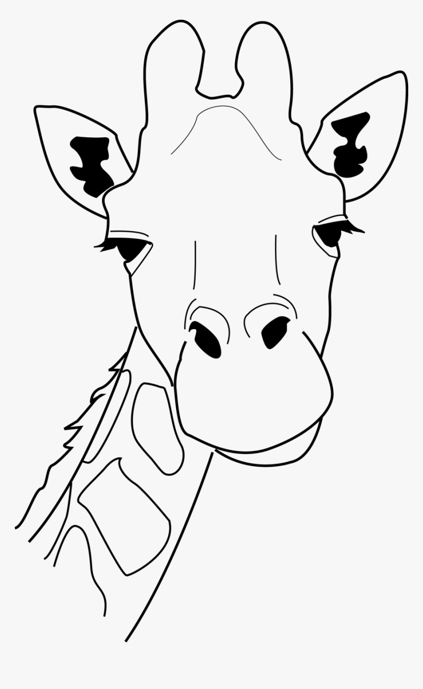 - Giraffe Head Line Drawing 241412 900×1,425 Pixels - Giraffe Head