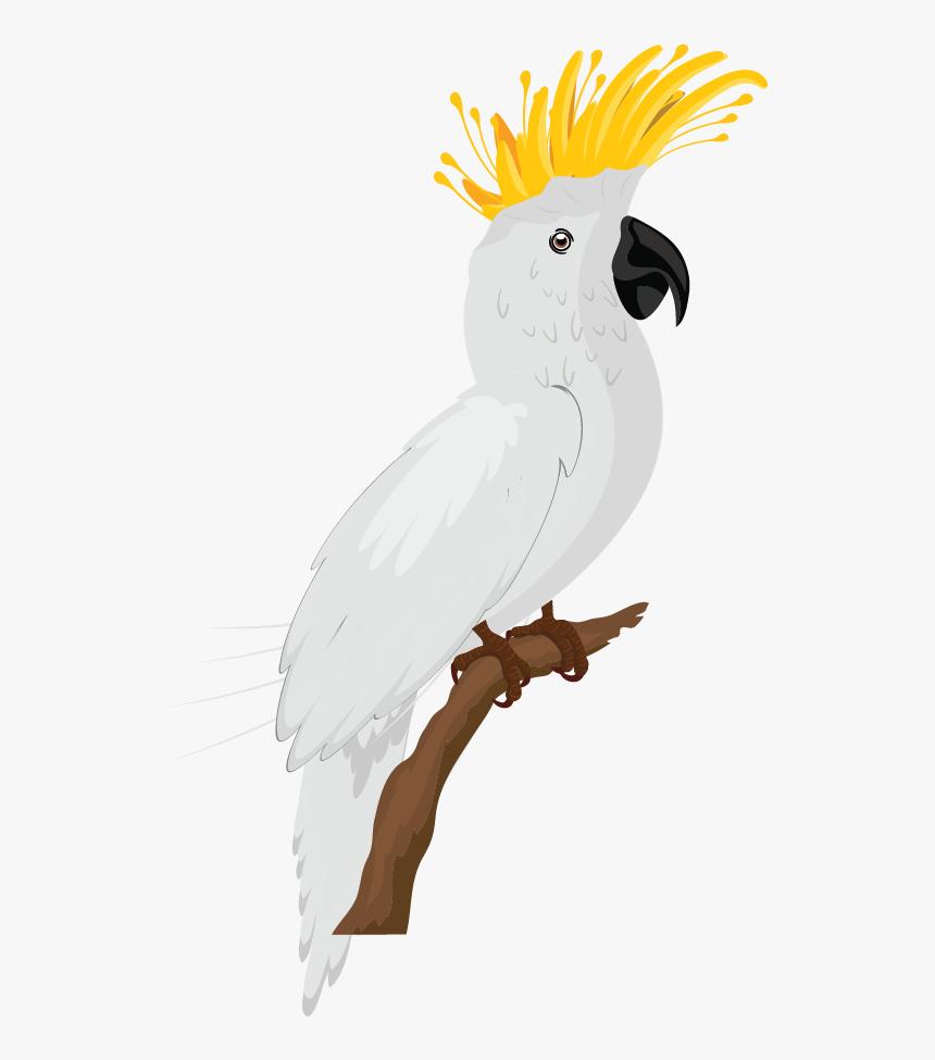 Sketsa Gambar Burung Warna Hd Png Download Transparent Png