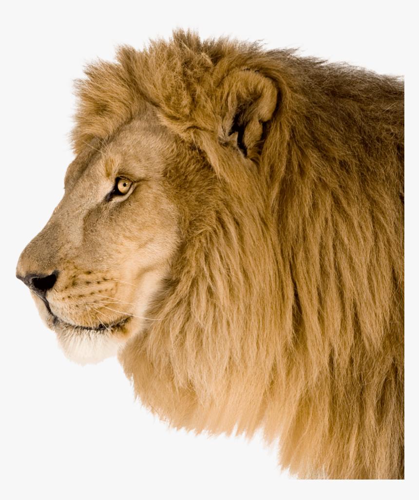 Lion Head Side Png, Transparent Png , Transparent Png Image - PNGitem