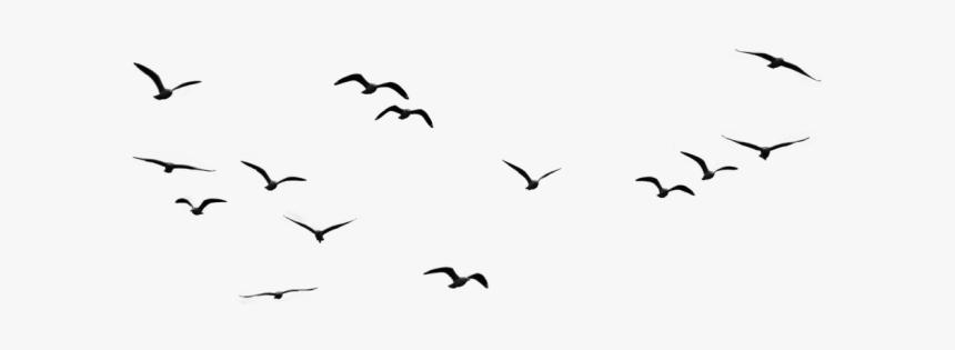 burung terbang png vector clipart psd birds in sky png transparent png transparent png image pngitem burung terbang png vector clipart psd