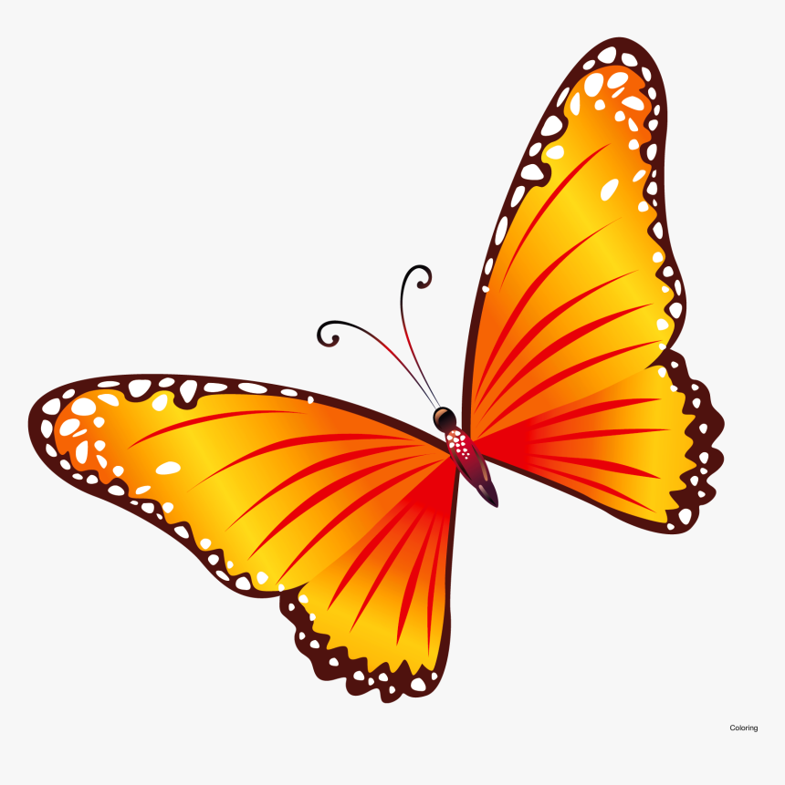 Transparent Butterfly Border Clipart Transparent Background Butterfly Clipart Free Hd Png Download Transparent Png Image Pngitem
