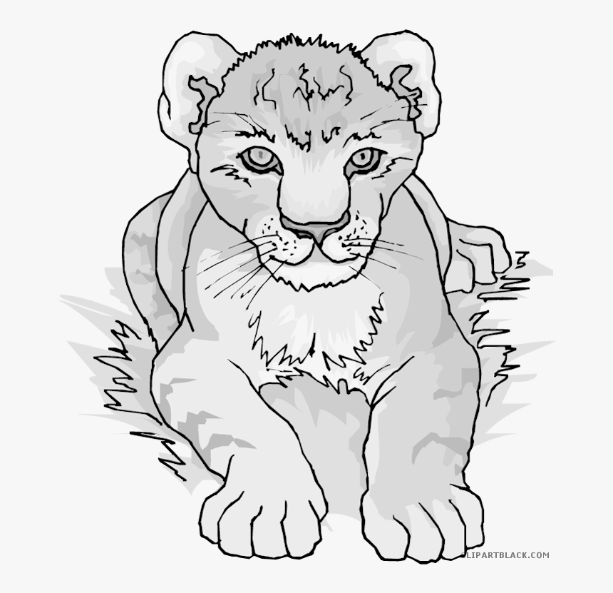 Clipartblack Com Animal Free Black White Images Lion Cub Clipart Black And White Hd Png Download Transparent Png Image Pngitem Lion cubs being kept illegally in europe are unlikely to have been born in the wild, officials say. lion cub clipart black and white