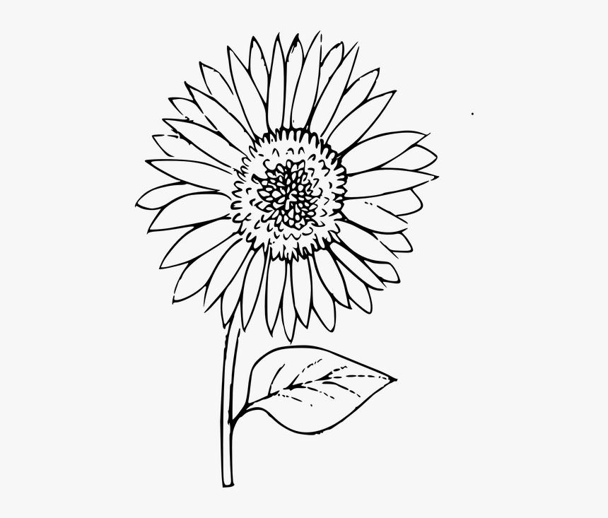 Outline Sunflower Coloring Plant Flower Outline Images Of Sunflower Hd Png Download Transparent Png Image Pngitem