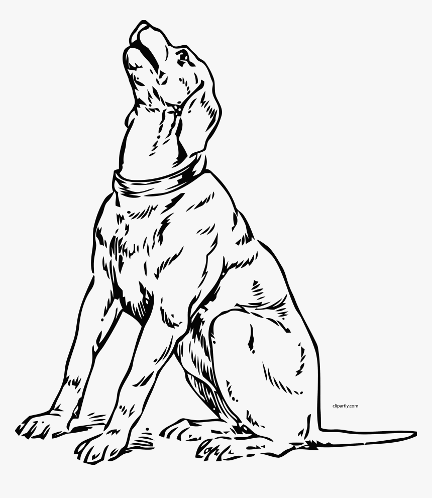 Coloring & Activity Pages | Bark | 991x860