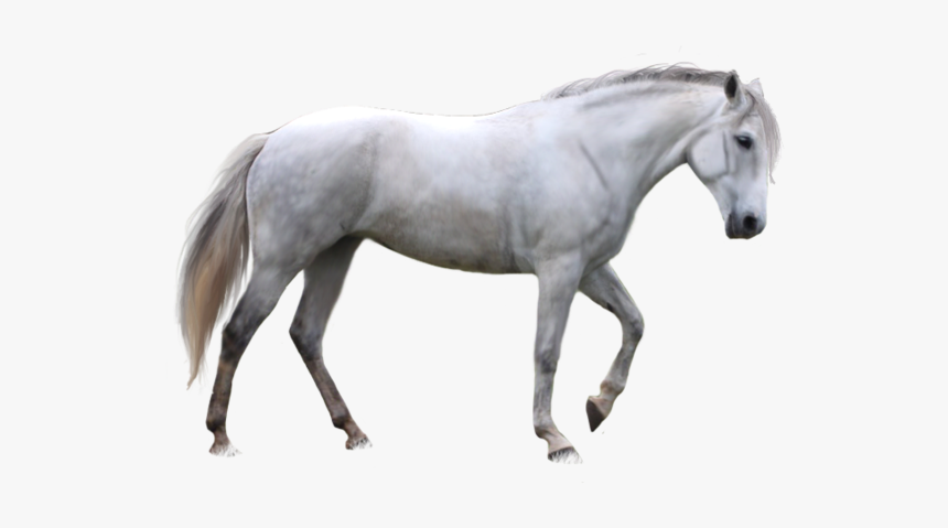 White Horse Transparent Background, HD Png Download , Transparent ...